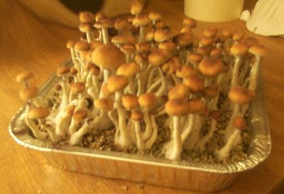 Mushrooms casing method