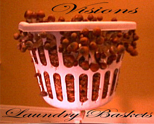 Visions Laundry Basket 2