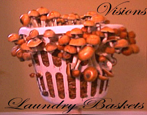 Visions Laundry Basket 5