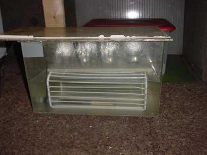 aquarium with heater