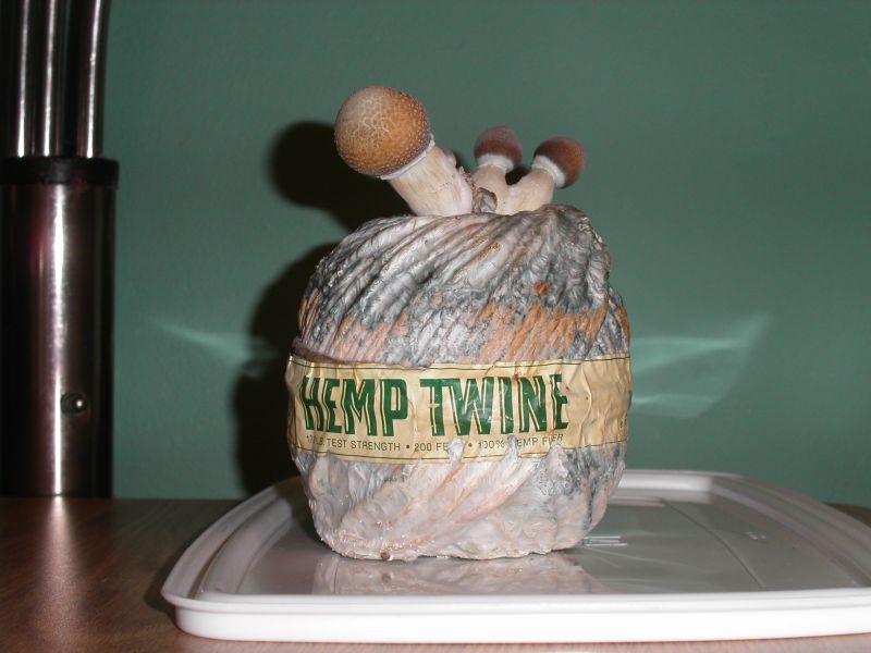 hemp twine a