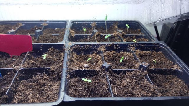 Seedlings!