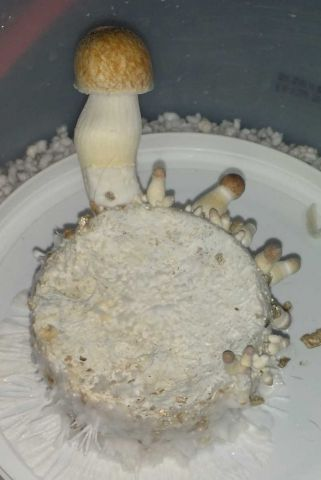 golden halo first flush 12 02 18 3