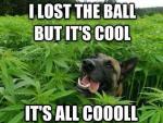 dog weed.jpg