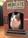 cat weed.jpg