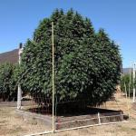 big plant.jpg