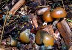 cyanofriscosa1-29-2009-2.jpg