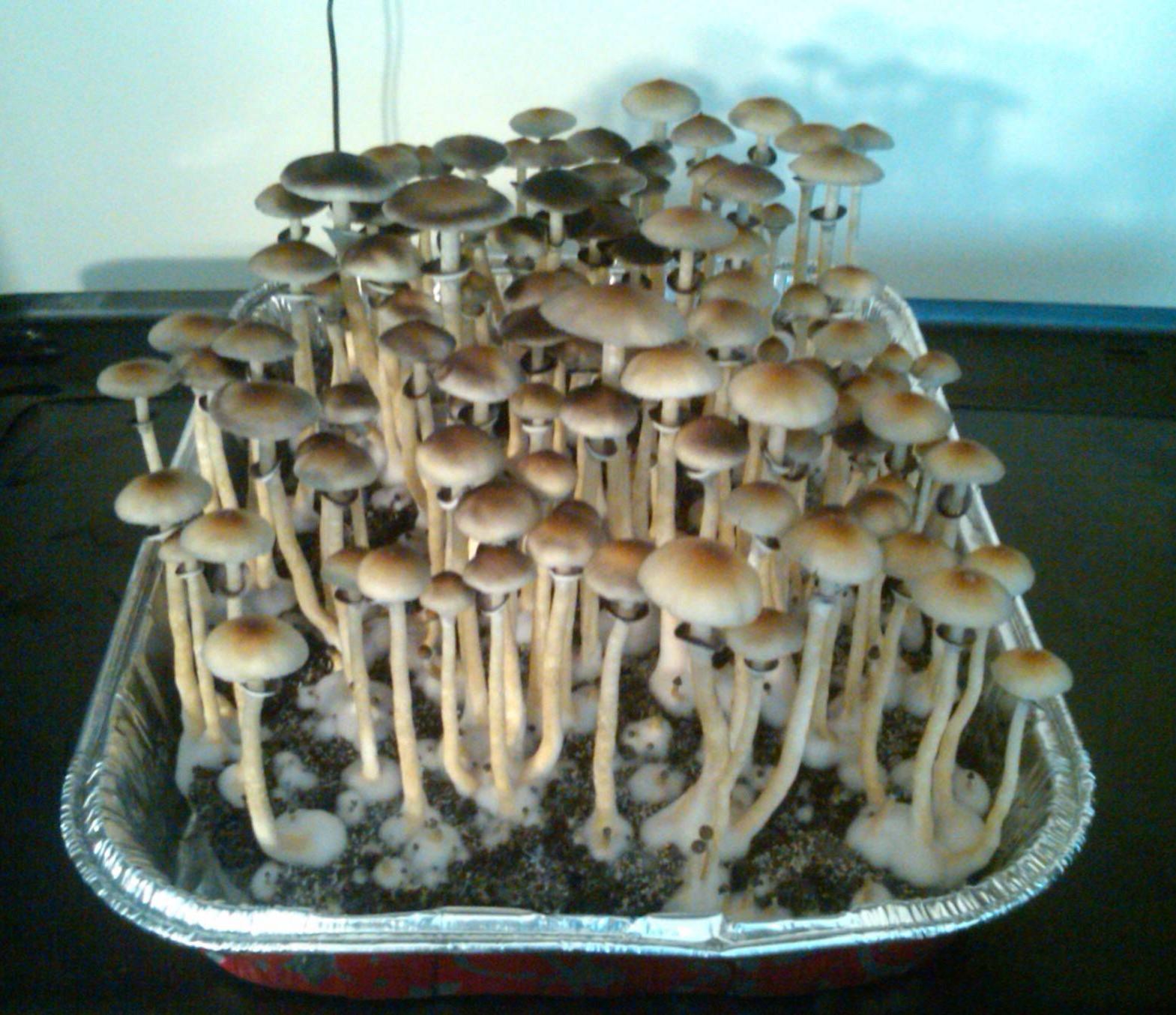 Best noob friendly fruiting chamber? - Fungi: Magic