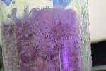 Mhycelium.png