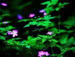 vivid flowers 1.jpg