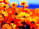 vivid flowers 2.jpg