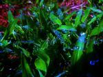 vivid grass.JPG