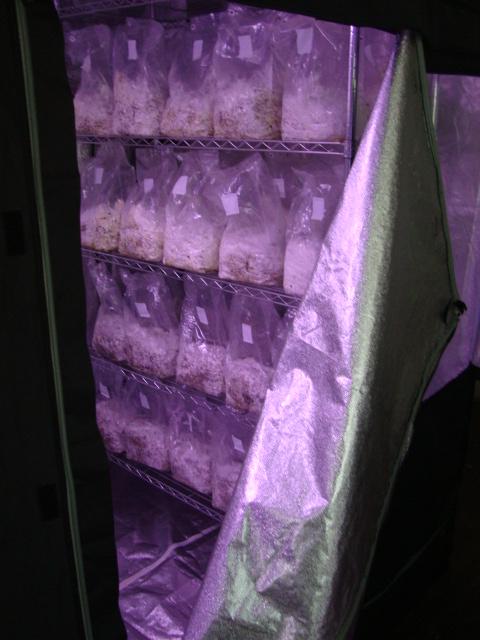 Lets talk about spawn bags  - Fungi: Magic Mushrooms - Mycotopia