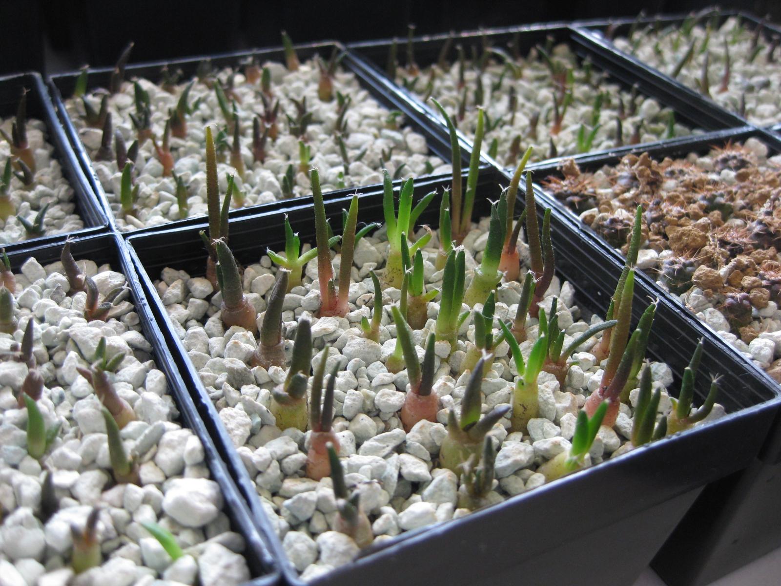 zeolites - GrassRoots - Mycotopia