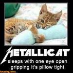 Metallicat.jpg