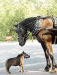 horse081006_536x700.jpg