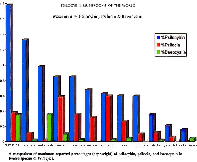Which is more potent Pan vs Psilocybe - Fungi: Magic Mushrooms
