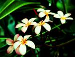 vivid flowers 3.jpg