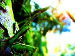 vivid lichen 1.jpg