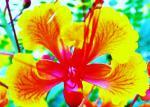 vivid flower 4.jpg