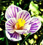 vivid violet 2.jpg