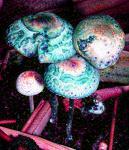 BluingCopeCyans-BanLamai-2005-ST-Machine-Elves-3abc.jpg