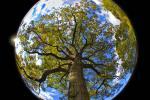 Earth Day sphere.jpg
