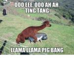 000-eee-000-ah-ah-ting-tang-llama-llama-pig-bang-30771605.png