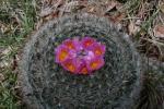 cactis01.JPG