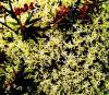 vivid moss 2 s.jpg