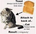 g-cat.jpg