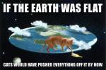 cat earth.jpg
