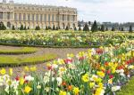 300mg plus of THH showed me CEV of gardens at Versailles, France.JPG