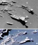 Mars mushrooms  2.jpg