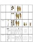 Copelandia image comparisons updated copy.jpg