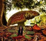 mushroom fairy.jpg