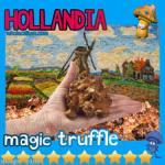 WHolecellium-Hollandia1.jpg