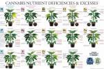 marijuana-deficiency-chart.jpg
