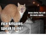 jesus-christ-hes-off-his-meds-again-rice-krispies-speak-30865009.png