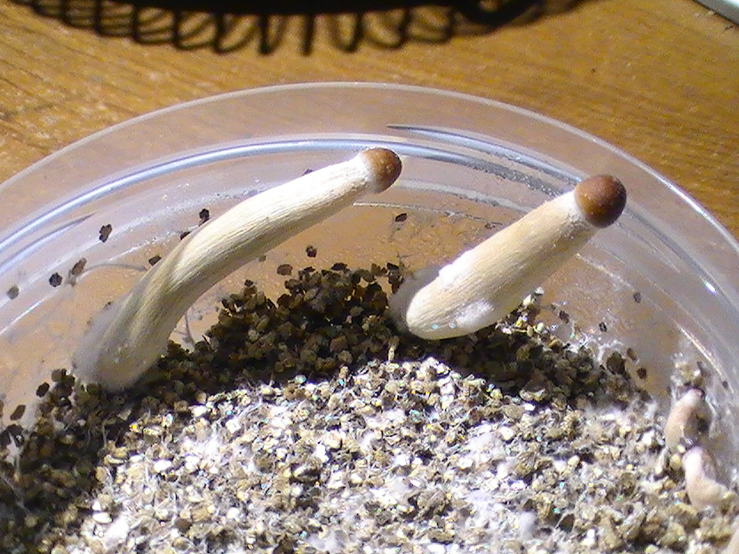 B+ Summer 2016 Grow Log (Neglect Tek) - Page 2 - Fungi