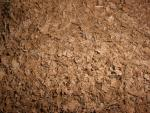 eco_earth_coir.jpg