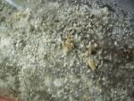 palenque macros 24 001.jpg