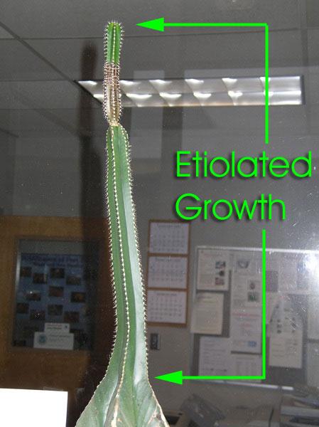 Cacti Newbie Botanicals Mycotopia