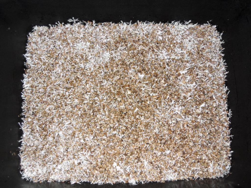 how to grow psilocybe cubensis bulk