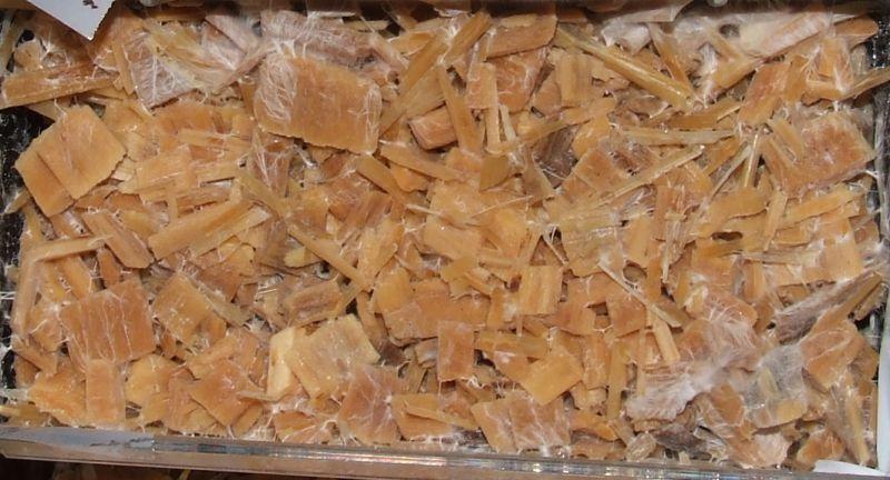 Woodlover Mushroom | Pics | Download |