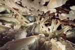 crystal-cave-615.jpg