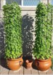 double mg planters 17 inch wide x 15 inch tall by 5 foot tall round fence.JPG