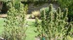 East side plants.jpg