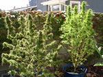 West side plants.jpg