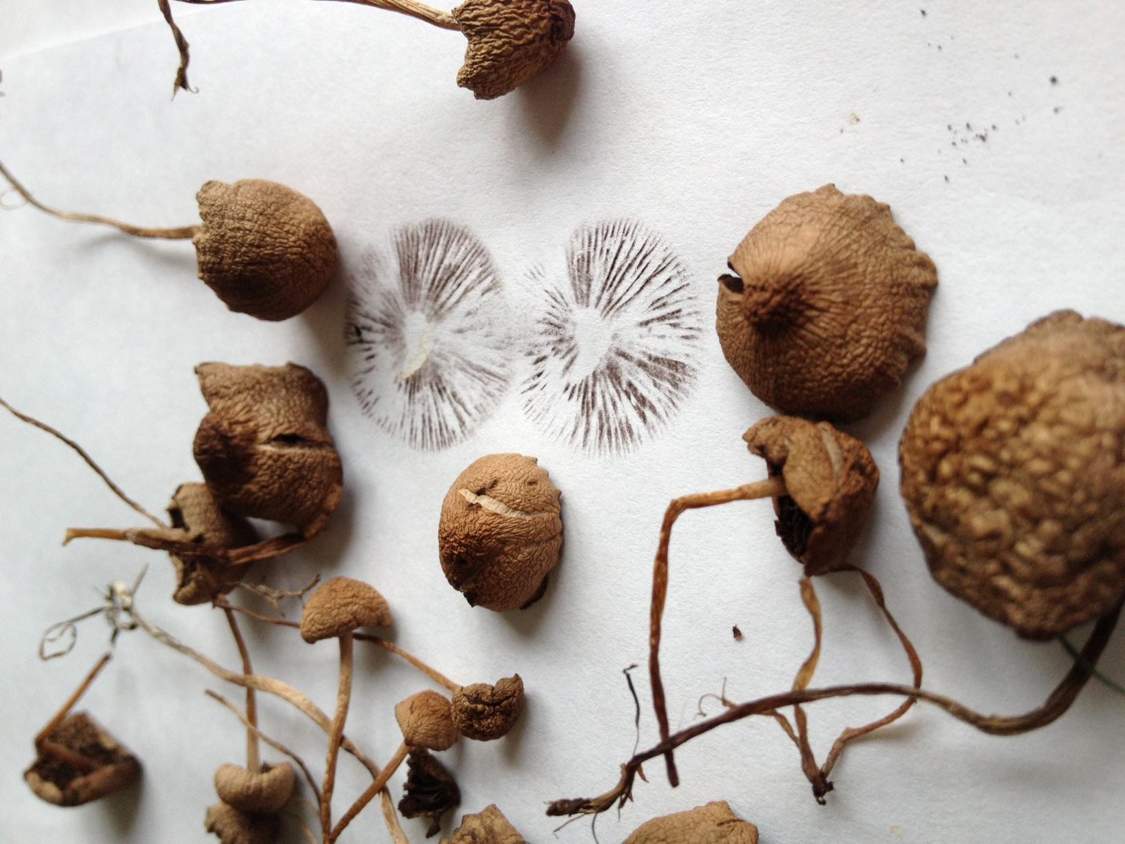 ID please? Liberty's in S W  Ohio? - Wild Mushrooming: Field
